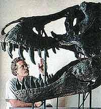 Челюсть, усеянная зубами двадцатисантиметровой длины, была грозным оружием. В 1992 году в Южной Дакоте (США) был обнаружен череп самца тираннозавра (ученые окрестили его «Стэн»).