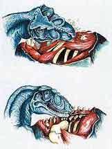 Сила укуса тираннозавра достигала 13,4 тонны на квадратный сантиметр, как выяснил американский ученый Грегори М. Эриксен. Ни одна кость не могла выдержать такого давления.