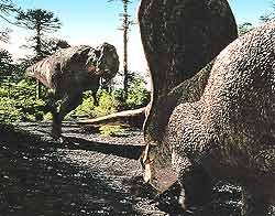 Тираннозавр подбегает к торозавру, силясь на него напасть. Его противник отнюдь не беззащитен. Даже грозному «тирексу» трудно справиться с рогами и массивным «панцирем», защищающим торозавра.