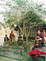 Священное дерево корья у народности бодо. Бодопара, штат Северная Бенгалия