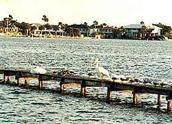 Одна из бухт в Мексиканском заливе со стороны Техаса. От пеликанов здесь просто спасу нет