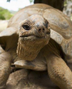 Черепаха Гариетт