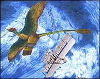 Археоптерикс, которого считают самой ранней ископаемой птицей, отличался строением крыльев, которое можно назвать
